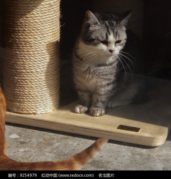 观察的猫咪图片
