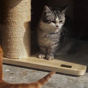 观察的猫咪
