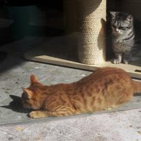 和睦相处两只猫咪