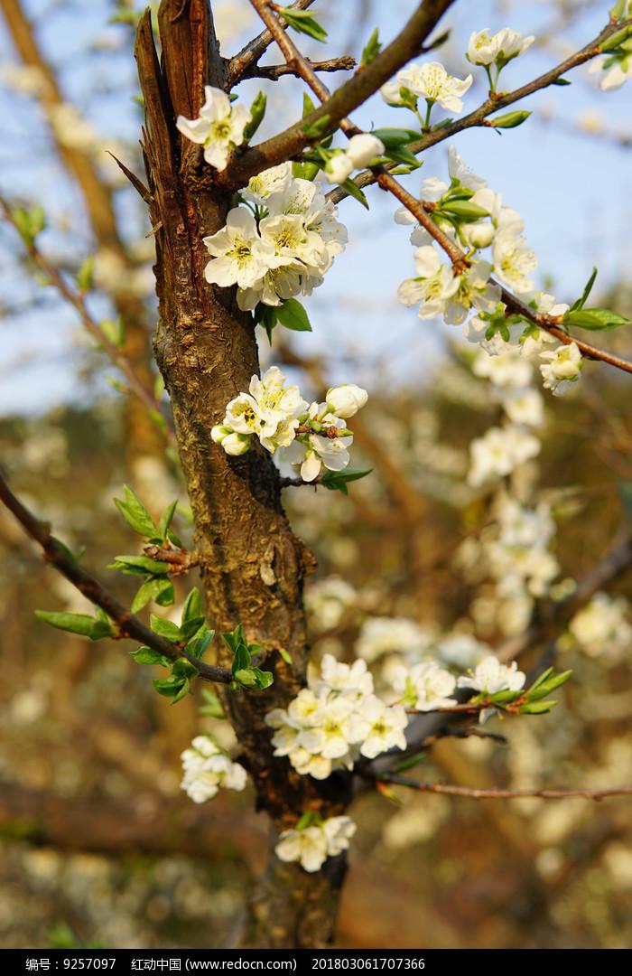 枯木逢春图片