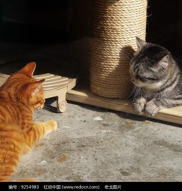 相互对视的猫咪图片