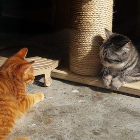 相互对视的猫咪