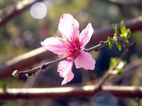 漂亮的桃花素材