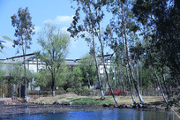 池塘树林与仿古建筑