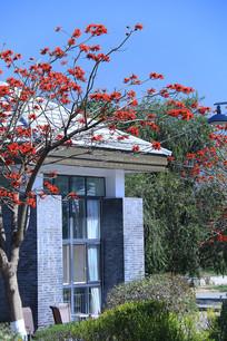 刺桐花与仿古小屋