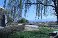 柳树草地与小屋