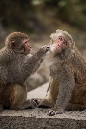 可爱的两个猴子