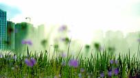地市绿地上的紫花
