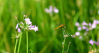 鲜花盛开蜻蜓飞舞