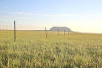达里湖火山草原