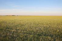达里湖深草原