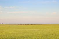 广袤的草原和远处的达里湖