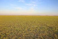 广袤的草原清晨美景