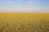 金色的草原晨曦
