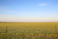 金色的草原和铁丝围栏