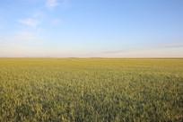内蒙草原达里湖草原