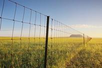 网栏下的达里湖火山草原晨光