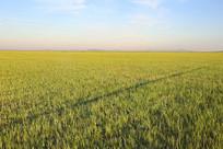 一望无际草原上的车辙印记