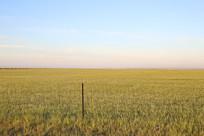 一望无际的草原美景