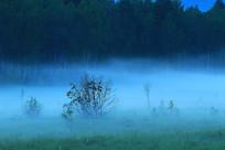 蓝色夜雾中的森林风光