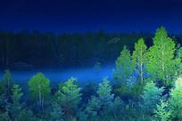 绿色森林 夜雾升腾