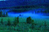 森林夜色 蓝雾迷漫