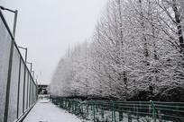 网球场雪景