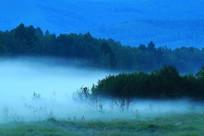 夜雾升腾的森林
