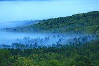 清晨林海云雾缥缈