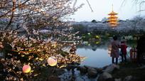 樱花湖畔夜色