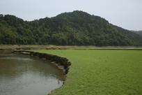 河流旁的岸边青草地
