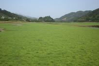 山边的青草地