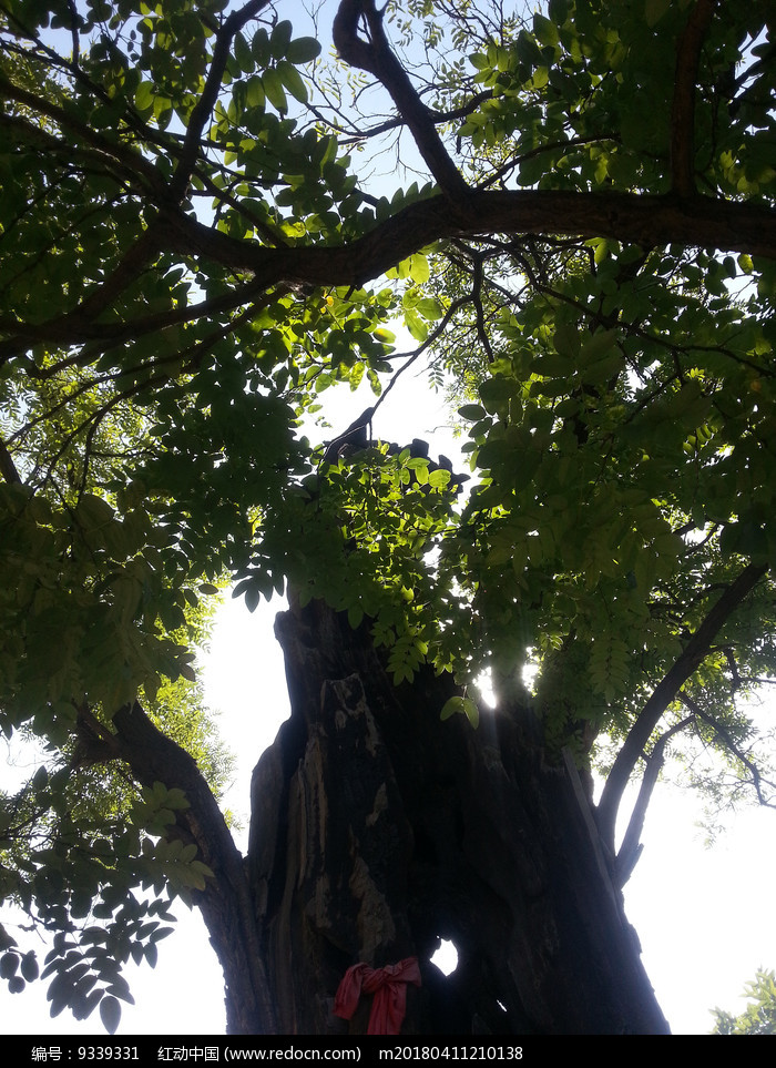 常家庄园古树参天图片