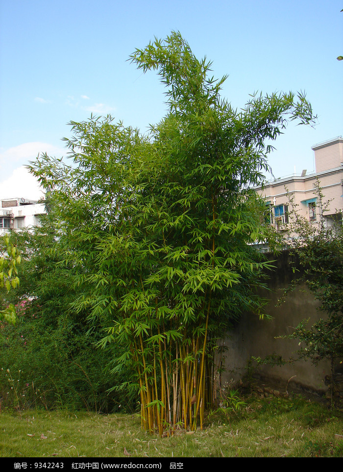 住宅小区的绿化植物竹子图片
