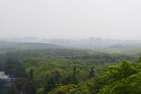 山脚下的树林