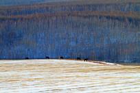 山林农田马群雪景