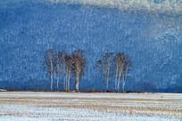 雪色田野上的白桦林