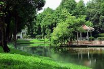 树林里湖上的凉亭