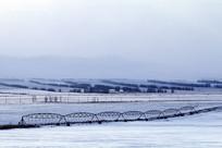 冬天农田 平移式灌溉机