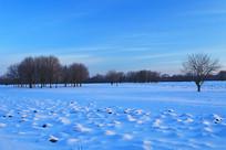 蓝色雪原树木