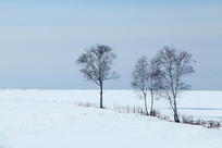辽阔雪原上的树木