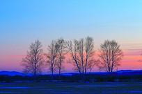 暮色中的雪原之树