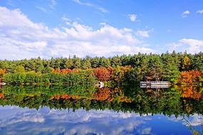 秋湖彩林 树林红叶