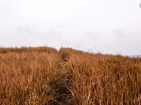 乡野山坡草丛风光杂草小道