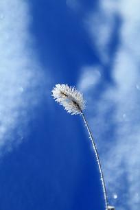 雪原 草叶霜花