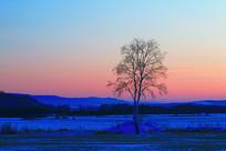 雪原树木-浓郁的夕阳