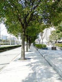 城市绿地路边树木卫士摄影图