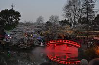 夜樱园红桥