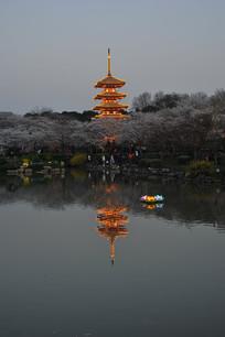 夜樱园京都塔