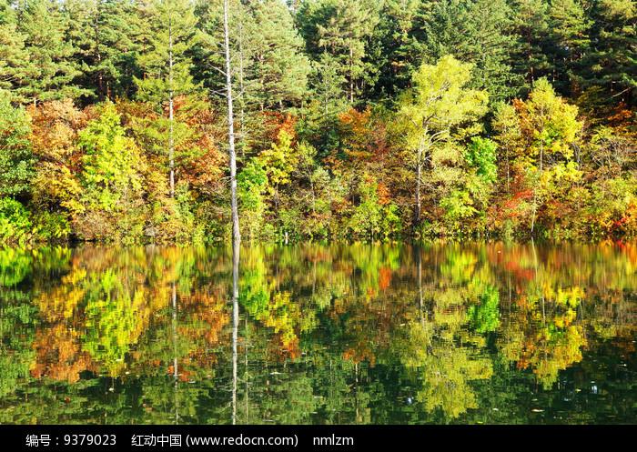 秋季湖泊彩林 图片